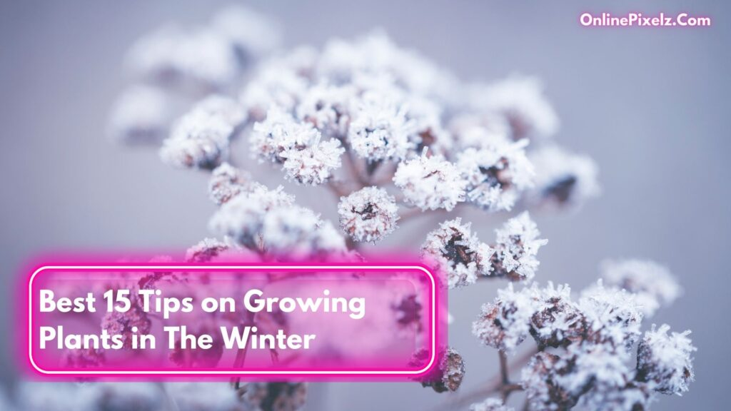 Tips on Growing Plants in The Winter